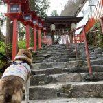 貴船神社を参拝~犬にもご利益を~【京都市左京区鞍馬貴船町】